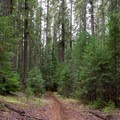 The Santiam Wagon Road Trail in the Willamette National Forest.- Santiam Wagon Road Trail: McKenzie River Trailhead