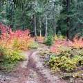 Fall foliage in the Willamette National Forest.- Santiam Wagon Road Trail: McKenzie River Trailhead