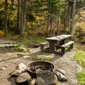 Typical campsite in Grout Pond Campground.- Grout Pond Campground