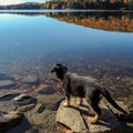Dogs are allowed in Grout Pond Campground.- Grout Pond Campground