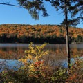 Fall foliage from Grout Pond Campground.- Grout Pond Campground