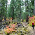 The Santiam Wagon Road is a great place to hike in the fall.- Santiam Wagon Road Trail: McKenzie River Trailhead