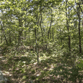 Intersecting the South Taconic Trail.- Brace Mountain