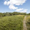 A worn path to the peak through blueberry heaths.- Brace Mountain