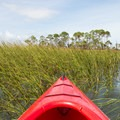 On the edge of the salt marsh at high tide- Little Tybee Island
