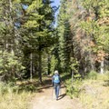 The first leg of  the trail is through thick forest.- Phelps Lake Loop Hike