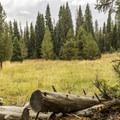 Fine meadows along Beaver Creek.- Beaver Creek and Taggart Lake Loop Hike