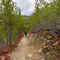 The fall color is not only in the trees.- Beaver Creek and Taggart Lake Loop Hike