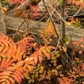 Fall foliage on the Beaver Creek Trail.- Beaver Creek and Taggart Lake Loop Hike
