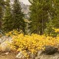 Fall at Taggart Lake.- Beaver Creek and Taggart Lake Loop Hike