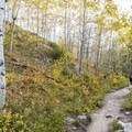 Taggart Lake Trail.- Beaver Creek and Taggart Lake Loop Hike