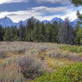 Views of the Tetons begin to pop above the trees.- Signal Mountain Trail