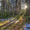 """The sun setting on the hike back on the """"ponds"""" side of the loop.- Signal Mountain Trail"""