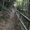 The pathway down is decent.- Cucumber Falls