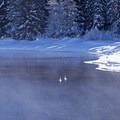Winter scene on a Snake River snowshoe.- Snake River Snowshoe via Jackson Lake Dam