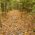 Most of the Ruth Walter Trail is flat and easy going.- Rainbow Falls
