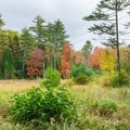View of the wetlands on the Newton Trail.- Rainbow Falls