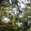 Some sites are well-shaded by oak branches and Spanish moss.- River's End Campground