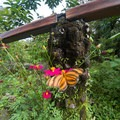 Flowers and butterflies abound around the trailhead.- Sendero Arenal 1968 Trail