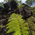 The forest is slowly taking over volcanic rocks.- Sendero Arenal 1968 Trail