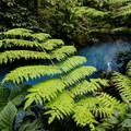 Large and exotic plants along the river.- Rio Celeste