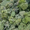 Aerial view of the forest canopy just outside the park.- Rio Celeste
