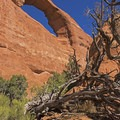 Skyline Arch in Arches National Park.- Skyline Arch Trail