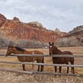 The pastures still have horses.- Historic Town of Fruita