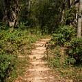Steps along the trail.- Hominy Creek Greenway