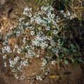 Unidentified species (help us identify it by providing feedback).- Hominy Creek Greenway