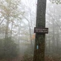 After about 2 miles, take a left at the sign. Follow the blue blazes to Annapolis Rock.- Annapolis Rock on the Appalachian Trail