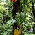 Beautiful flora along the hike.- Mistico Arenal Hanging Bridges Park