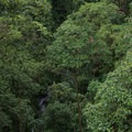 View of a hiker through the dense forest.- Mistico Arenal Hanging Bridges Park