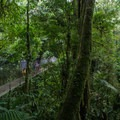 As the hike is very mild, it can be a great outing for families with young kids.- Mistico Arenal Hanging Bridges Park
