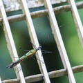 One of the many visitors to the forest canopy.- Mistico Arenal Hanging Bridges Park