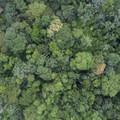 Aerial view of hanging bridge.- Mistico Arenal Hanging Bridges Park