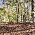 Woodland Valley Campground.- Wittenberg + Cornell Mountains
