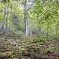 Ascending Wittenberg.- Wittenberg + Cornell Mountains