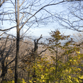 The Hunter West Kill Wilderness through the trees.- Wittenberg + Cornell Mountains