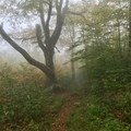 Foggy morning on the trail.- Appalachian Trail: Fontana Dam to Clingmans Dome