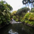 One of the main hot spring areas.- Tabacon Hot Springs