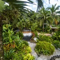 Beautiful vegetation in the main spa area.- Tabacon Hot Springs