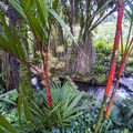 The vegetation around the river enhances the hot spring experience.- Tabacon Hot Springs