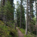 The trail ascends through the forest just northwest from the lake.- String Lake Loop