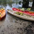 Rent a kayak to explore the Wekiwa River.- Wekiwa Springs State Park