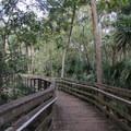 Boardwalks run throughout the park.- Wekiwa Springs State Park