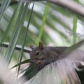 Hungry squirrel eyeing the picnic area.- Wekiwa Springs State Park
