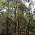Wekiwa Springs State Park Campground.- Wekiwa Springs State Park Campground