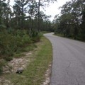 An endangered gopher tortoise ambles along the road.- Wekiwa Springs State Park Campground