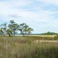 Salt marsh stretching nearly to the mainland.- White Point Beach Hike
